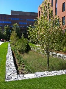 Oak_Hall_bioretention