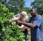 Part-time Jobs: Master Gardener County Coordinator Positions