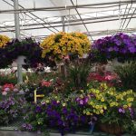 The New England Greenhouse Floriculture Guide Now Available!