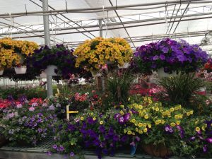 greenhouse flowers