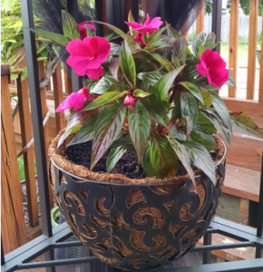 flower in pot on porch