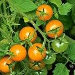 USDA Issues Statewide Farmland Disaster Declaration