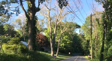 dead trees along roadside