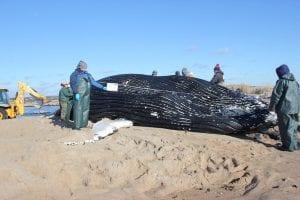 wild whale examination
