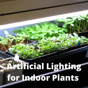 indoor plants under light