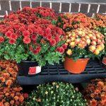 September Checklist for Connecticut Gardeners