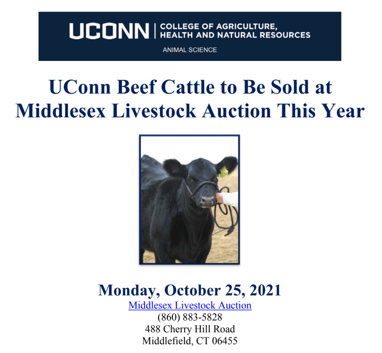 Department of Animal Science UConn Beef Cattle to be Sold at Middlesex Livestock Auction